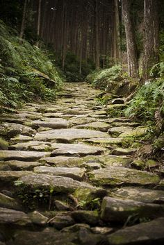 Beautiful Roads, Beautiful World, Beautiful Places, Beautiful Landscape Wallpaper, Beautiful Landscapes, Forest Bathing, Forest Road, Woodland Fairy, Pilgrimage