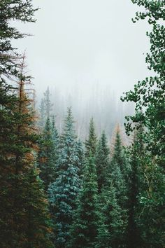 green - nature | life on earth - forest - wilderness - wild -...
