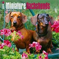 2012 Miniature Dachshunds Calendar