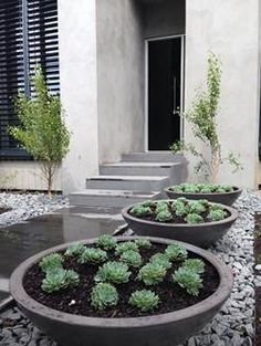 Tall Planters And Rocks Against Wall Lined By Stones
