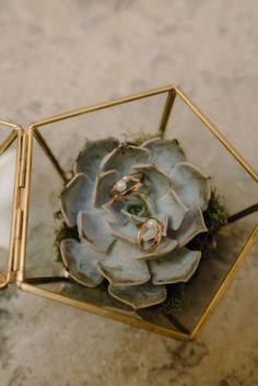 Ring box made with echeveria succulent plant closed in a golden terrarium, perfect for boho weddings.