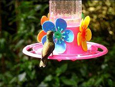 Bellas Aves de El Salvador: BEBEDEROS ó ALIMENTADORES para colibríes Salvador, Bird Feeders, Outdoor Decor, Home Decor, Home, Humming Bird Feeders, Pink Flower Wallpaper, Canary Birds, Things To Do
