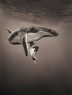 Magical Animal Photography by Gregory Colbert | Abduzeedo Design Inspiration & Tutorials