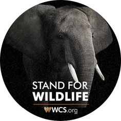 Get Involved - WCS.org Take ACTION and sign Petitions