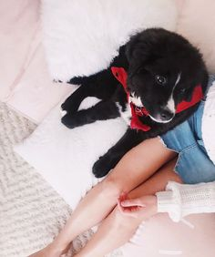 Chien Mira, Emma Verde, Dogs, Cute, Youtube, Beautiful, Animals, Dog Baby, Pet Dogs