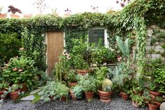'Before moving to Brunswick we had a small courtyard filled with a variety of potted plants mostly grown from cuttings, bulbs and rhizomes – it was this odd assortment of plants that formed the starting point for our garden design', says David.