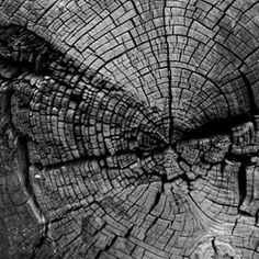 Cracked tree stump showing age rings in black and white – Natur – Wood Craft Woods Photography, Texture Photography, Abstract Photography, Photography Ideas, Photography Outfits, Pattern Photography, Photography Studios, Image Photography, Boudoir Photography