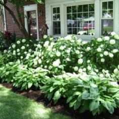 Landscaping with hydrangea and hosta. Lining back patio