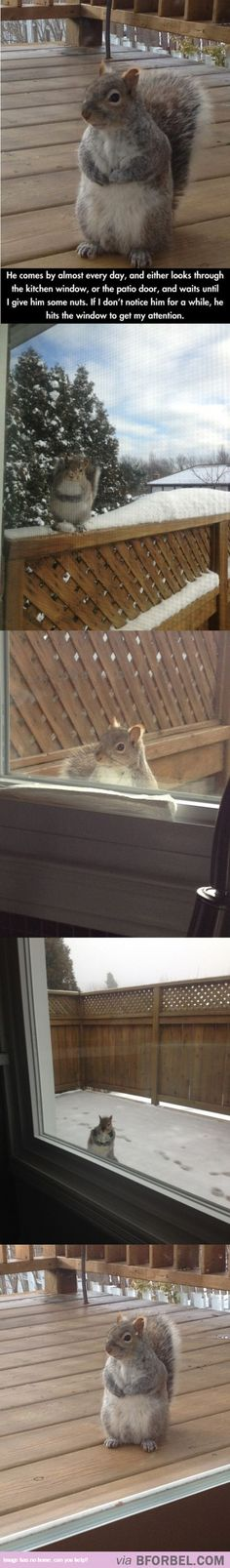 So This Squirrel Adopted Me…