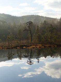 An autumn day in Glen Affric