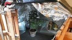 Lazio: #Roma  a #Vigna Murata coltivavano piante di marijuana allinterno di un ex fabbrica.... (link: http://ift.tt/2cQ2AHx )