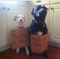 Shoplifting dogs