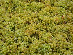 A close-up look at the grapes as they wait to be blessed.