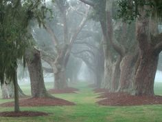 Avenue of Oaks planted in the mid 1800's at Retreat Plantation, St Simons Island, GA