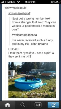 this is so funny if I lived in Canada I would want a moose in my pool Funny Shit, Funny Cute, The Funny, Funny Memes, Funny Stuff, Funny Things, Random Stuff, Videos Funny, That's Hilarious