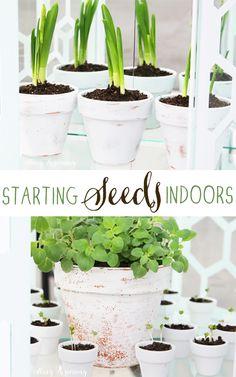starting-seeds-indoors