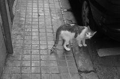 Fue un instante fugaz: Un gato callejero