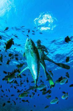 Coatesman's  Spearfishing & Waterman's Blog: Spearfishing Ascension Island