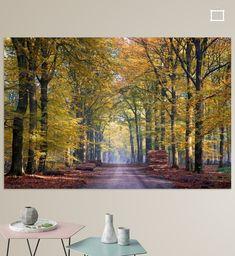 Nieuw in mijn Werk aan de Muur shop: Gouden zandweg in het bos bij Hoog Soeren op de Veluwe Felder, Poster, Canvas, Photography, Painting, Prints, Pictures, Digital Art, Canvas Frame