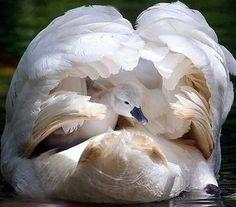 Μαμά fucks μεγάλο πουλί