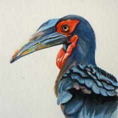 Water colour Bird painting. Ground Hornbill Flower Paintings, Watercolor Bird, Southern, Fine Art, Colour, Flowers, Animals, Paintings Of Flowers, Color