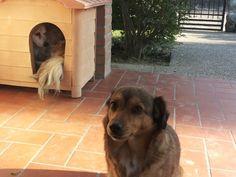 i cani mi insegnano la fedelta'