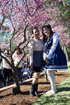 Cherry Blossoms Festival, Auburn
