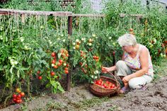 Interested in the freshest vegetables possible? Learn some tips and tricks for a perfect kitchen garden from our permaculture expert, Jami. Small Vegetable Gardens, Vegetable Garden Design, Vegetable Gardening, Outdoor Plants, Garden Plants, Garden Living, Farm Gardens, Easy Garden, Growing Vegetables