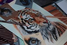 artist, awesome, incredible, drawing, drawings, nature, tiger