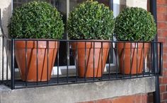 Box ball topiary in simple wire window boxes on a red brick townhouse