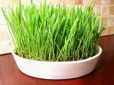 grass centerpiece