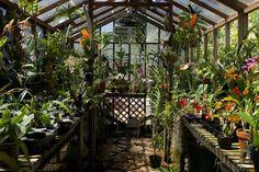 Dicas de Cultivo - Orquidário FlorArte