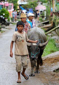 going to the buffalo market, Rantepao, Sulawesi, Indonesia