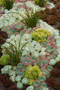 Designing a Garden With Foliage: Outdoors: Home & Garden Television -- Colorful Succulents: A composition of various sedums creates the foundation of an eye-catching, multi-seasonal bed. River of Hens and Chicks . Succulents In Containers, Cacti And Succulents, Planting Succulents, Planting Flowers, Succulent Arrangements, Succulent Landscaping, Succulent Gardening, Garden Landscaping, Landscaping Ideas