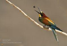 Superb Nature : Photo