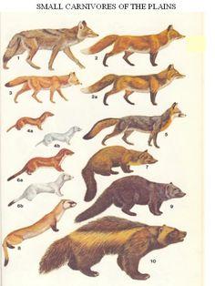 small_carnivores.jpg (540×720)