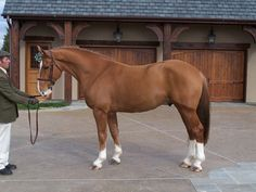 Grogan's High Fidelity - Irish Draught Sport Horse stallion