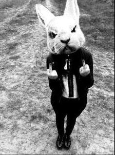 Middle finger rabbit salute