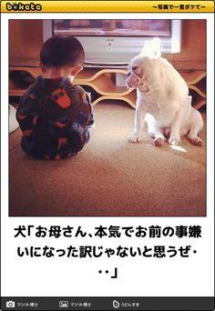 犬「お母さん、本気でお前の事嫌いになった訳じゃないと思うぜ・・・」