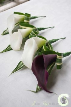 Calla lily buttonholes - Not purple though. something to match bouquet Wedding Bridesmaid Flowers, Tulip Wedding, Bridal Flowers, Calla Lily Wedding Flowers, Wedding Dresses, Calla Lily Bouquet, Calla Lillies, Calla Lily Boutonniere, Lilies Flowers