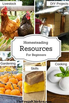Homesteading Resources For Beginners