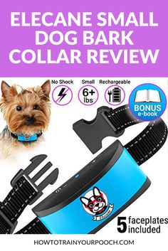 Looking for a bark collar for your pup? Read on to find out if the Elecane Dog Bark Collar is the one for your dog. Small Dog Bark Collar, Best Bark Collar, Bark Collars For Dogs, Anti Bark Collar, Dog Collars, Off Leash Dog Training, Puppy Training Tips, Best Dog Training, Training Collar
