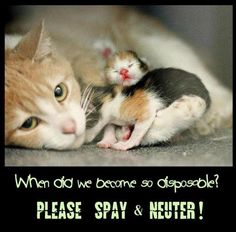 Spay and neuter your pets and there will be less homeless animals.