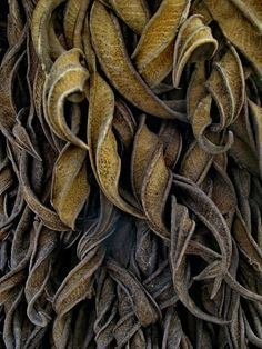 Curling Leaves - beauty in decay; natural leaf textures; organic inspirations or design