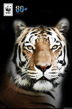 Wusstet ihr, dass eine der weltweit größten Tigerpopulationen bis zum Ende dieses Jahrhunderts auszusterben droht? Wir müssen endlich handeln! Macht mit bei der #EarthHour und setzt ein Zeichen für mehr Klimaschutz. Denn Klimaschutz ist Artenschutz!