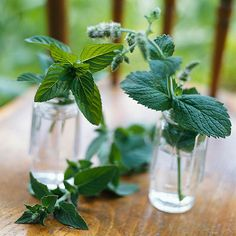 Spearmint, peppermint, and chocolate mint are just a few of the many mint varieties available. All are rapid spreaders, making them suitable as groundcovers in confined areas, such as a parking strip or an area bounded by a foundation and sidewalk. Or grow it in a container to prevent it overtaking garden neighbors. Mint prefers partial shade but tolerates full sun.