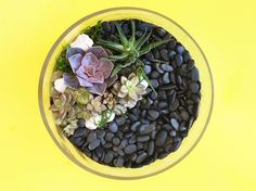 How to Make a Succulent Terrarium - GoodHousekeeping.com