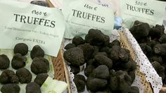 New techniques and years of patience are helping American farmers produce black Perigord truffles, once a rare European delicacy. Chefs and foodies love the rich, earthy flavors and freshness; growers love the boutique price. Grow Your Own Mushrooms, Growing Mushrooms, Growing Truffles, Truffles For Sale, Truffle Mushroom, Black Truffle, Clay Soil, Like Chocolate, Root Vegetables