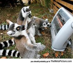 Oh, Praise Be To The Heater Gods