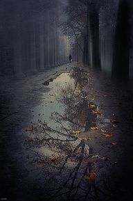 The woods are lovely, dark and deep. And I have miles to go before I sleep. Robert Frost